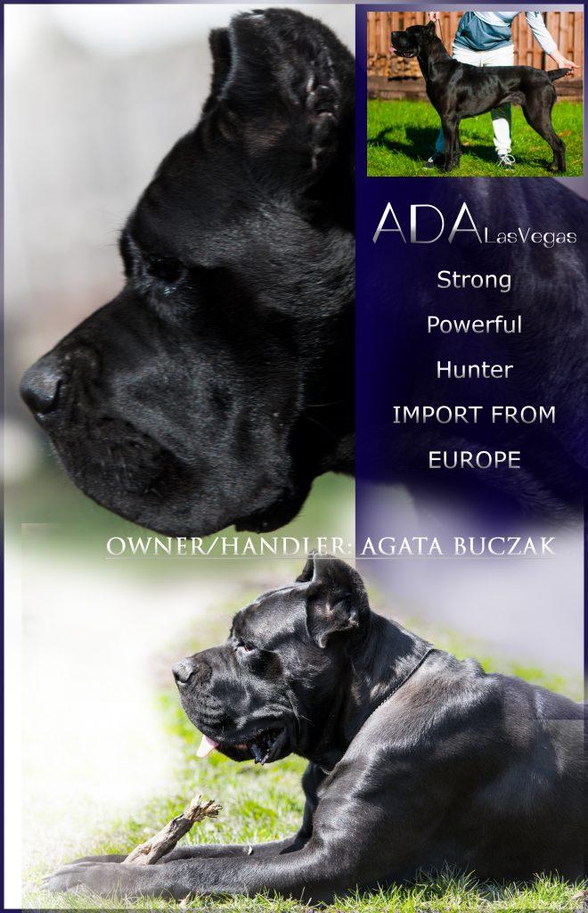 ADA ADVERTISING