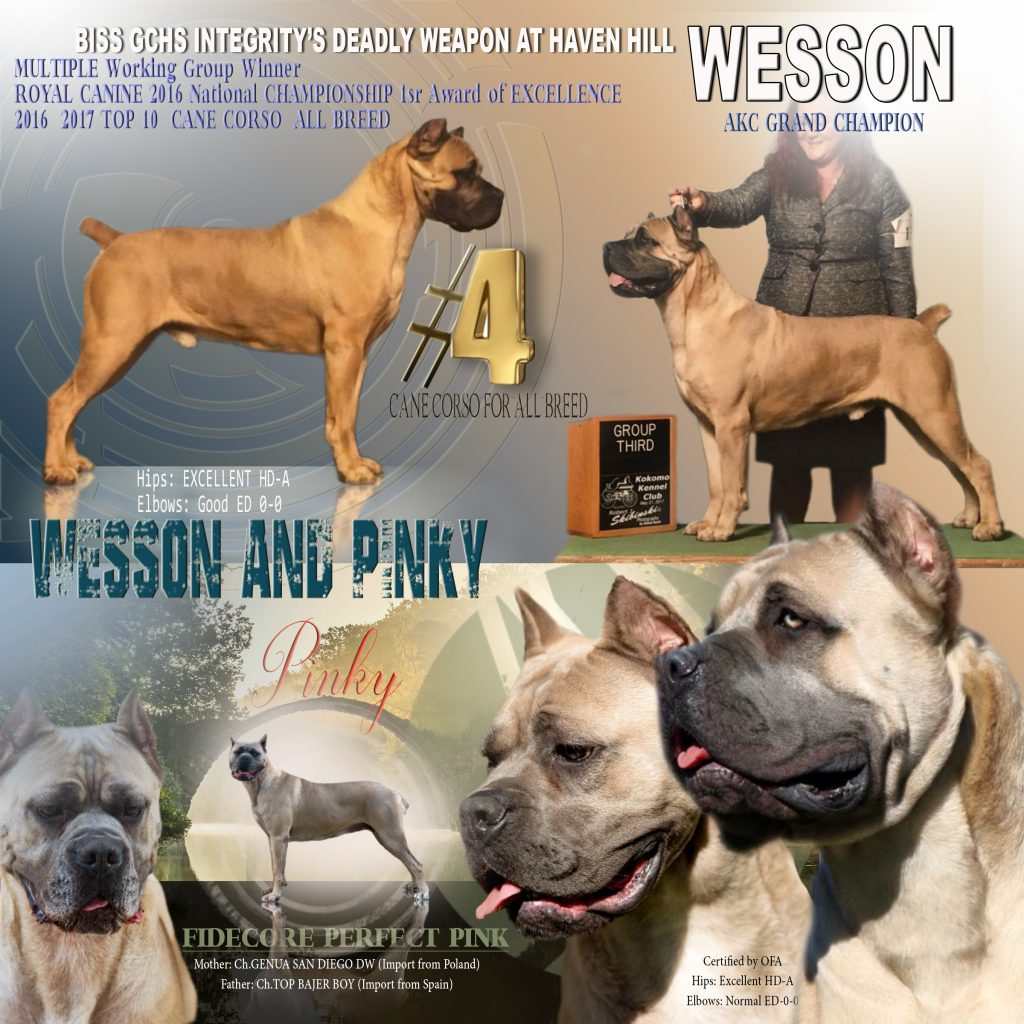 AVAILABLE Puppies/Adults – FIDECORE CANE CORSO Main Page